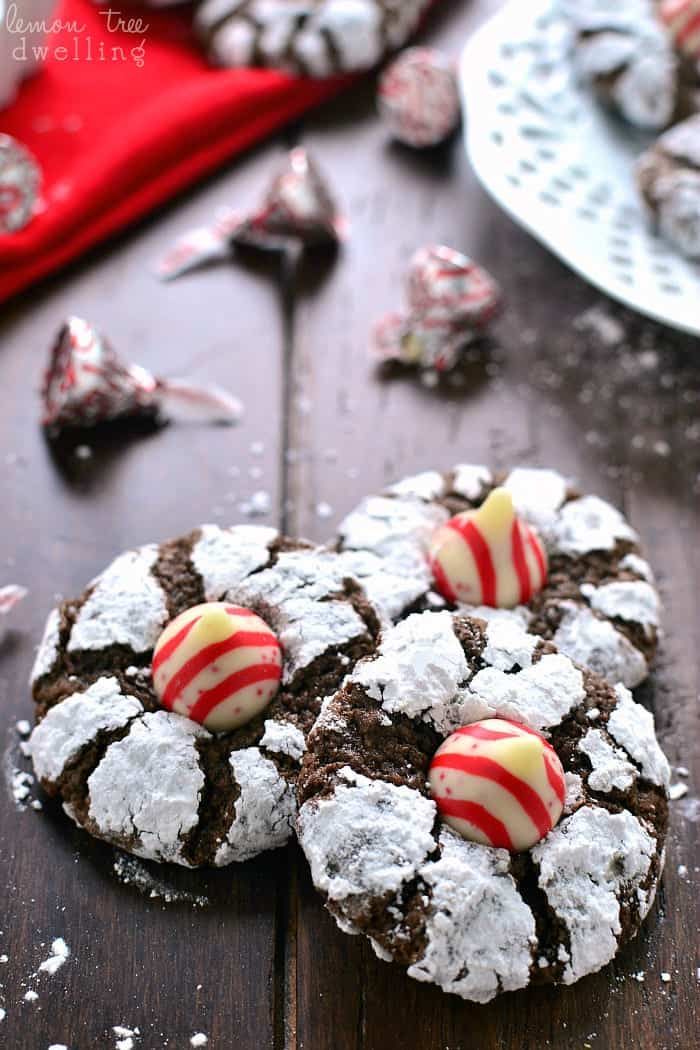 Chocolate Peppermint Blossom Cookies are loaded with rich chocolate and peppermint and topped with a Candy Cane flavored Hershey's Kiss. Perfect cookies for mint (and chocolate) lovers everywhere!