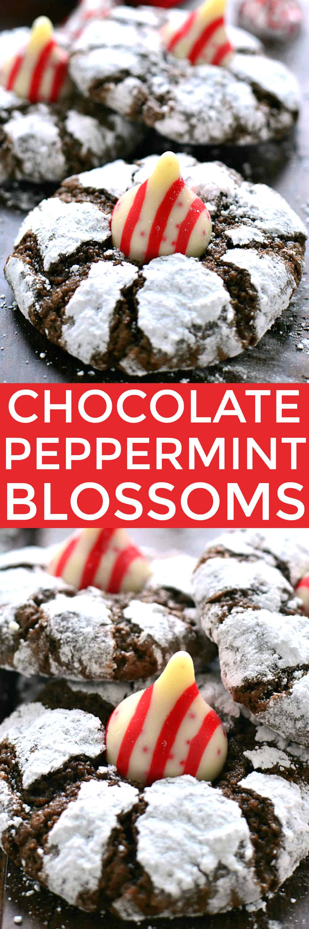 Chocolate Peppermint Blossom Cookies are loaded with rich chocolate and peppermint and topped with a Candy Cane-flavored Hershey's Kiss. The perfect holiday cookies for mint (and chocolate) lovers everywhere!