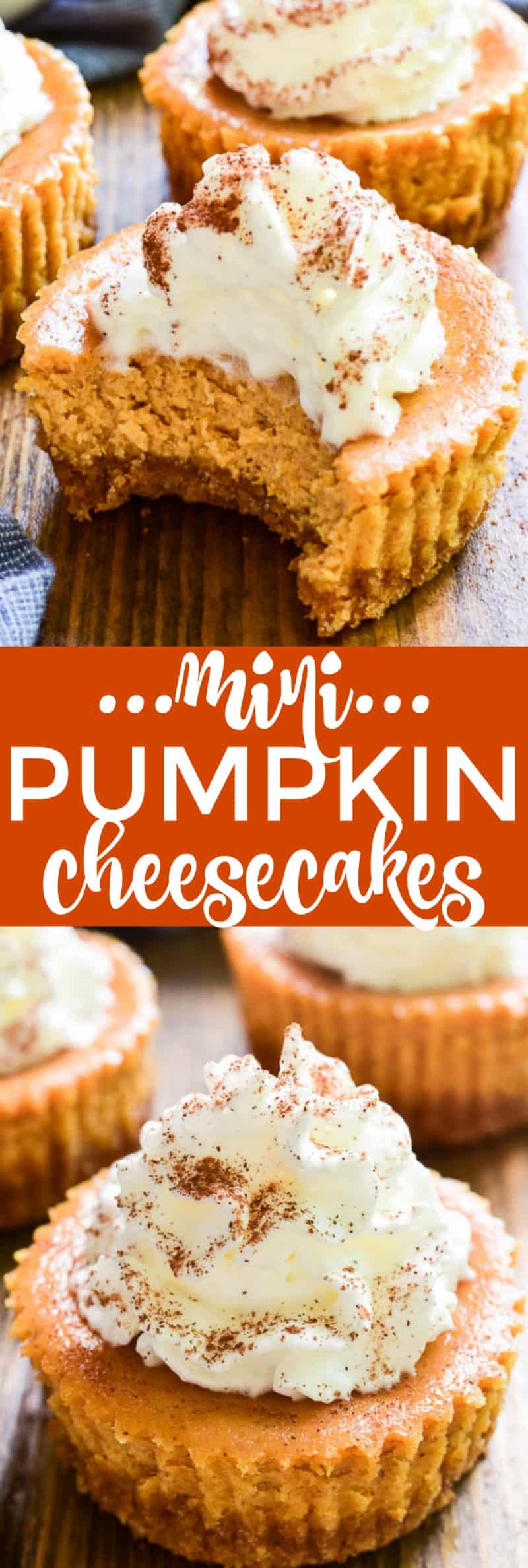 Mini Pumpkin Cheesecakes with Cinnamon Whipped CreamWhat2Cook  |Mini Pumpkin Cheesecake Bites